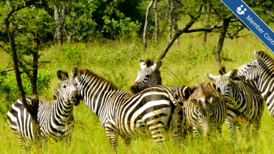 Five Sights Not to Miss as an Expat in Uganda
