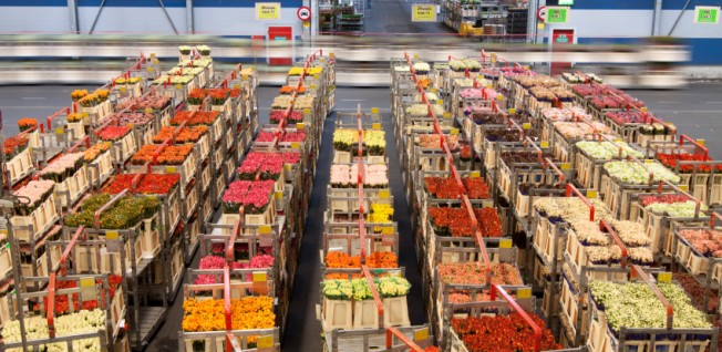 The Netherlands is one of the biggest exporters of agricultural products in Europe.