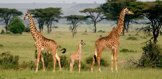 The tourism industry attracts many expats to Arusha.