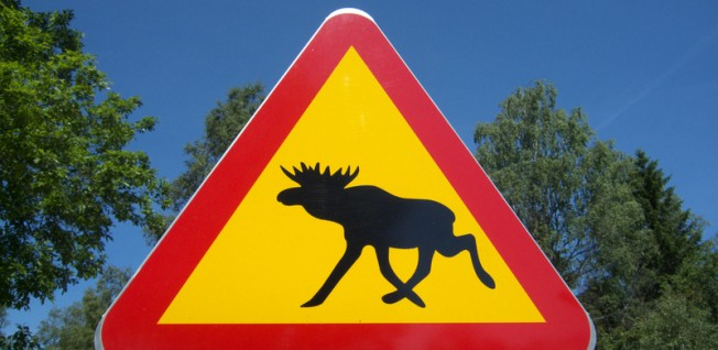 Moose are the national animal of Sweden.