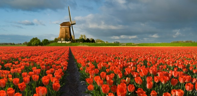 Windmills, tulips, clogs, and bicycles are exactly what expats moving to the Netherlands may expect.