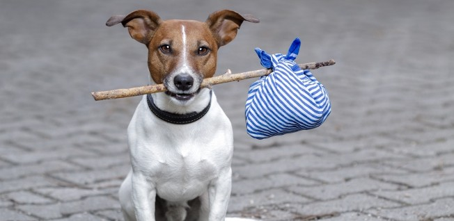 Make sure that everything is in order before sending your four-legged companion to Hong Kong!