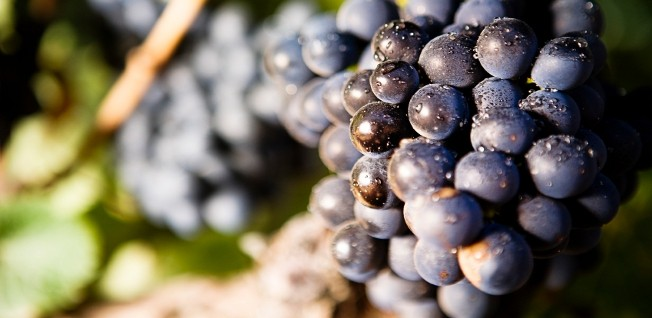 Although agriculture plays a rather marginal role, South African wines are enjoyed worldwide.