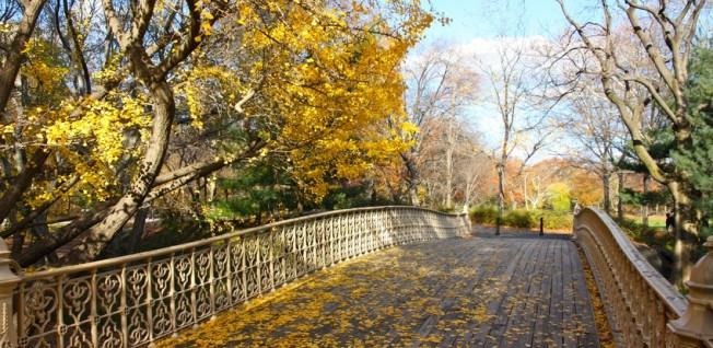 Central Park is Manhattan's green lung and very popular with residents.