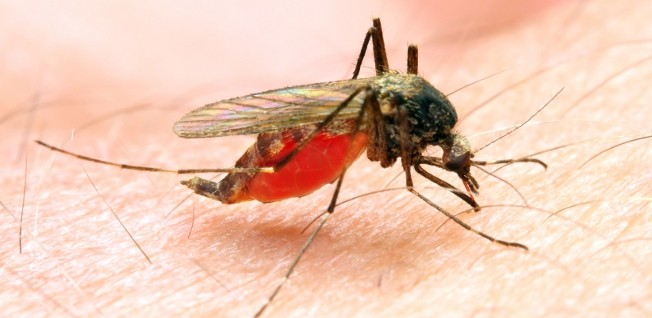 Malaria is one of the most severe health issues in Ghana.